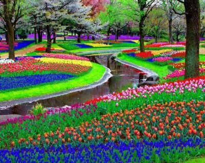 صور لأكبر حديقة زهور في العالم