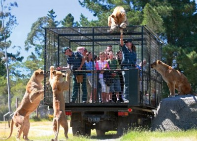 صور حديقة الحيوانات فيها طليقة والزوار في الأقفاص