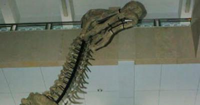"""اكتشاف آثار أقدام ديناصور """"الهادروسار"""" بجنوب الصين2013 9998416563.jpg"""