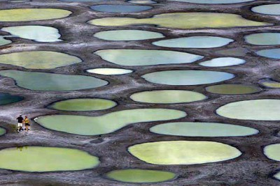 البحيرة المرقطة في كولومبيا البريطانية