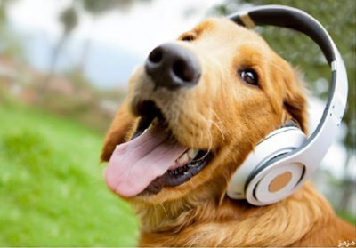 معلومات وفيديو نموذج أولى سمّاعة تترجم يفكر الكلب 9998430142.jpg