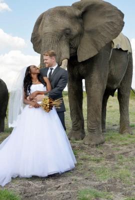 حفل زفاف خارج عن الطبيعة و المعتاد