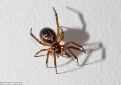 صور مخيفة .. لدغة عنكبوت في غرفة نوم امرأة كادت تودي بحياتها