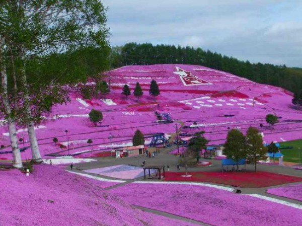 تلة الورد  في جزيرة هوكايدو في اليابان