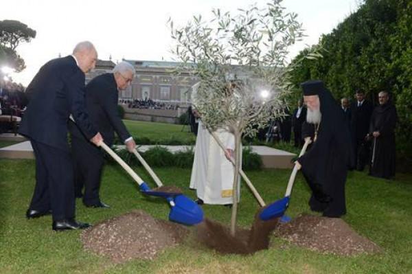 أبو مازن والبابا وبيريز يزرعون شجرة زيتون في حديقة الفاتيكان