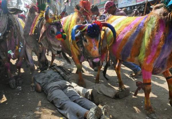 قصص من الحياة: قصة اسلام ارون كومار من عبادّ الأبقار 9998480731.jpg