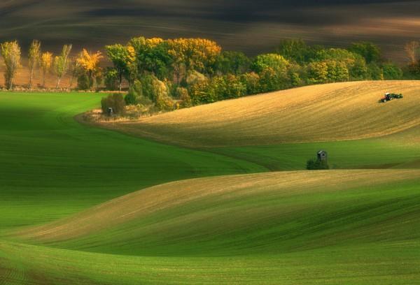 من حقول التشيك الرائعة