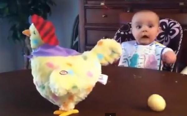ردة فعل طفل عند رؤيته لدجاجة تضع بيضه
