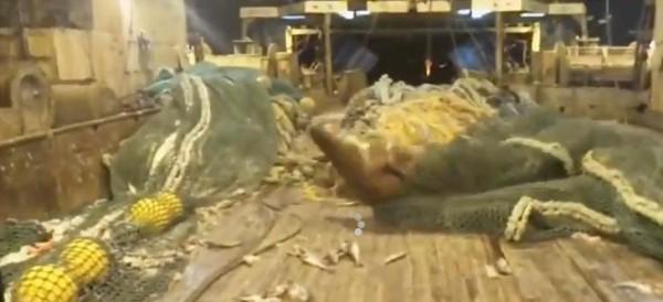 أسد البحر يهاجم صياد روسي وكلبه لاصطياده بالخطأ