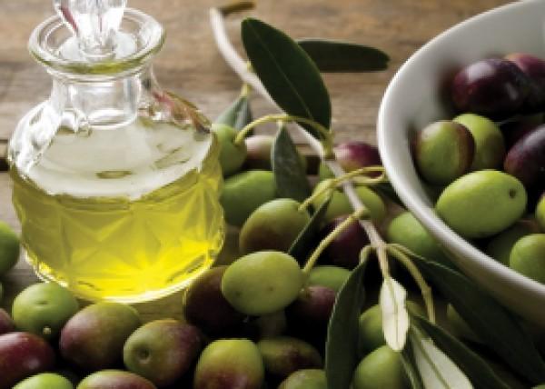 الزراعة بغزة تقرر وقف عصر الزيتون