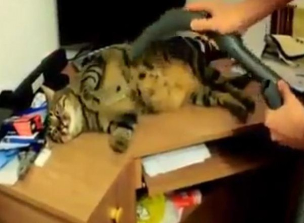 قط أثناء تنظيفه في شفاط كهربائي