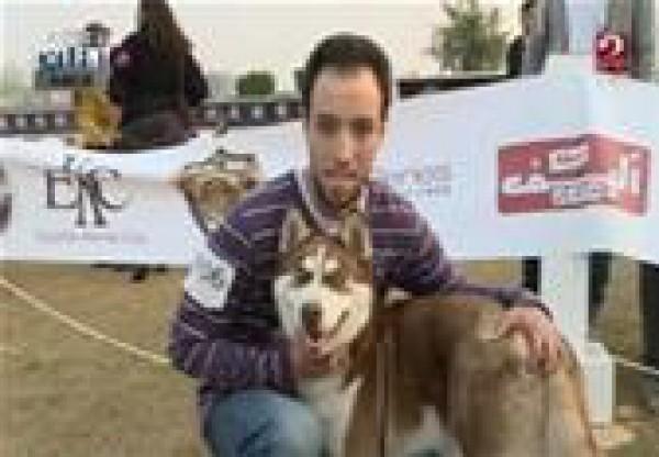 """استاد القاهرة يستضيف مسابقة """"ملك جمال الكلاب"""" لاختيار اجمل كلب فى مصر"""