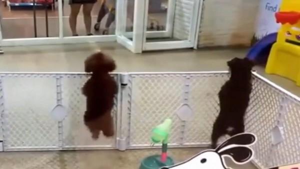بالفيديو.. الكلب الراقص يكتسح الانترنت