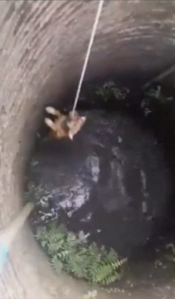 شاهد الكلب الشجاع الذي رفض الاستسلام للغرق في بئر