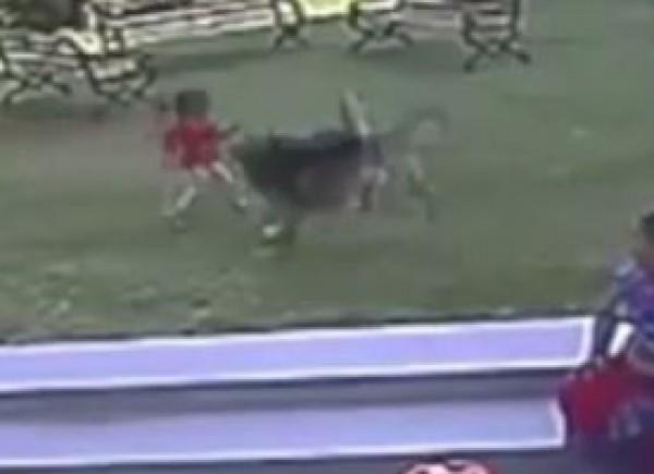 بالفيديو.. كلب ينقض على طفلة لم تتجاوز السنتين