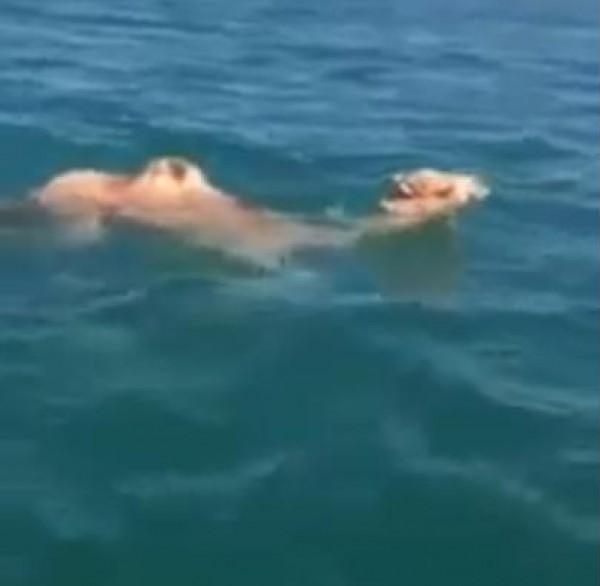 جمل يسبح في البحر