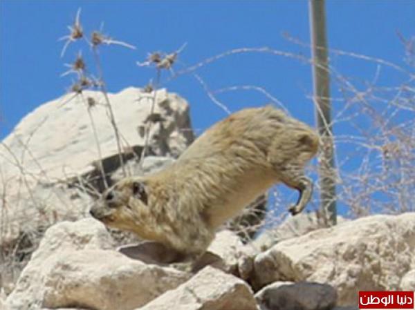 الليشمانيا تغزو الفلسطينيين