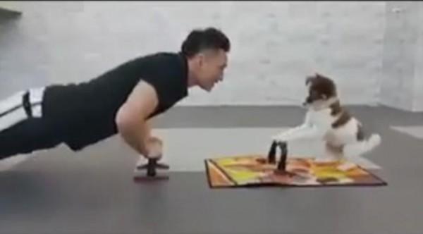 كلب يمارس الرياضة