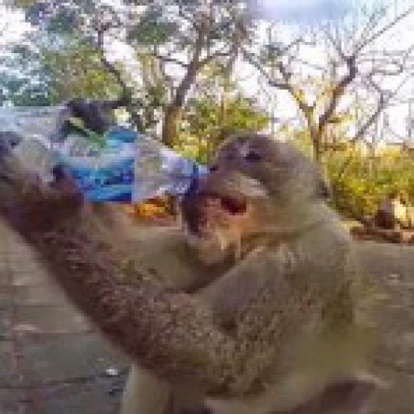 كيف سرق قرد زجاجة مياه من رجل..؟!