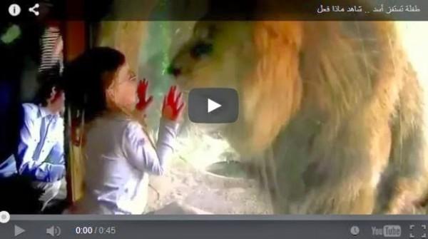 شاهد ..برأة الأطفال واللعب مع الأسد