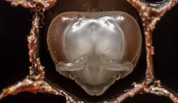 قصة حياة نحلة في 60 ثانية