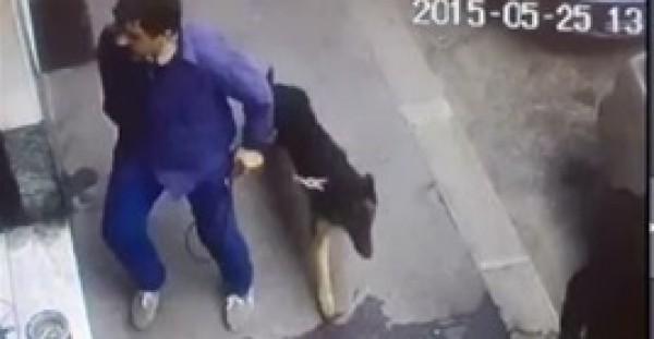 """""""كلب"""" يحبط عملية سطو مسلح على """"محل تجاري"""""""