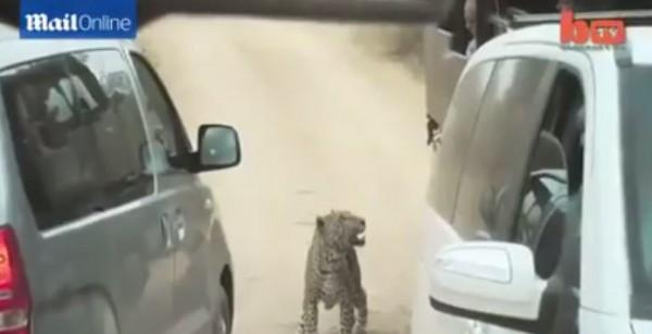 هجوم شرس لفهد على رحلة سياحية في جنوب افريقيا