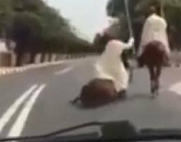 لحظة سقوط أحد خيول الملكية في الشارع العام