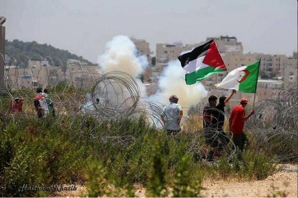فلسطين و الجزائر .. رصاصتان في بندقية واحدة