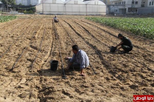لأول مرة في غزة...النزلاء يتدربون على الأعمال الزراعية