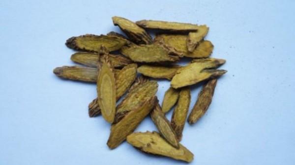 نبات صيني يُستخدم لعلاج الحمى 9998714248.jpg