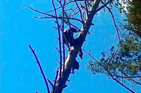 بالصور.. العثور على رجل محنط على ارتفاع 15 مترا يعانق شجرة