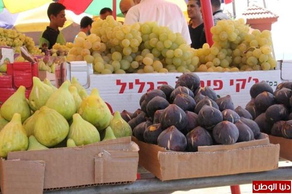 غزة العنب والتين فاكهة الموسم تعرف على فوائدهم ؟ 9998752395