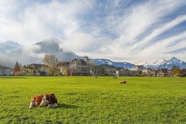 الريف السويسري 9998792429