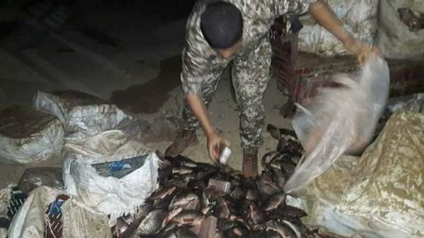 تهريب حشيش لغزة عبر السمك