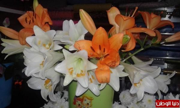 ثمن الوردة الواحدة 10 شواقل.. الأمهات ينعشن سوق الورود