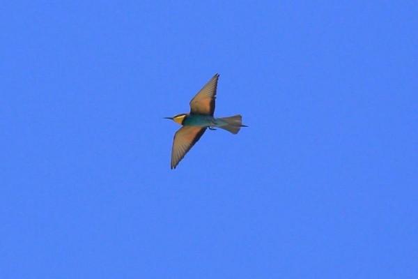 مواطن تركي يعثر على طير الأبابيل