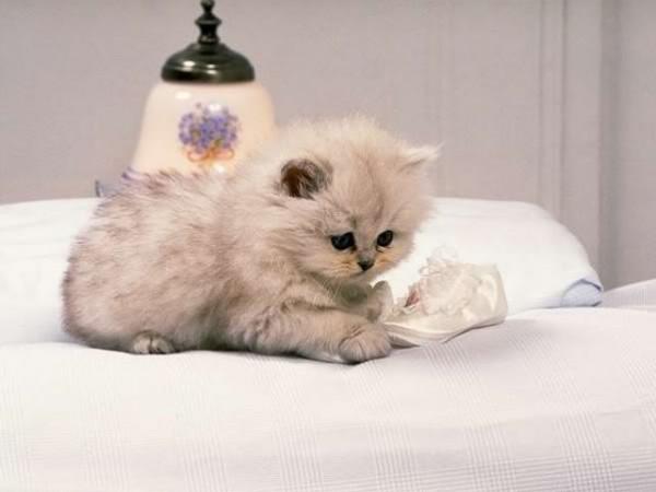 """""""قط"""" يبكي بحرقة على وفاة شريكته"""