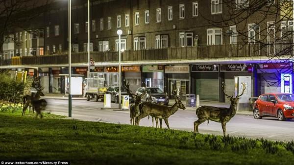 مُصور يرصد ظاهرة تحدث سراً كل يوم في شوارع لندن
