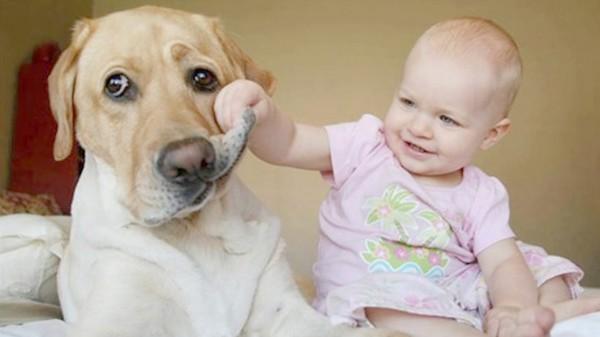 أطرف مواقف للاطفال مع الحيوانات