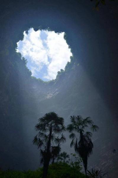 اكتشاف غابة تحت الأرض في كهف