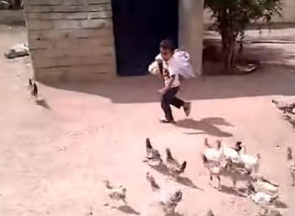 بالفيديو: مقطع مضحك لطفل سعودي يلحقه الدجاج وهو يبكي