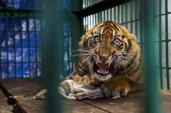 10 لقطات مُذهلة للحياة البرية تنتظر التتويج عالمياً