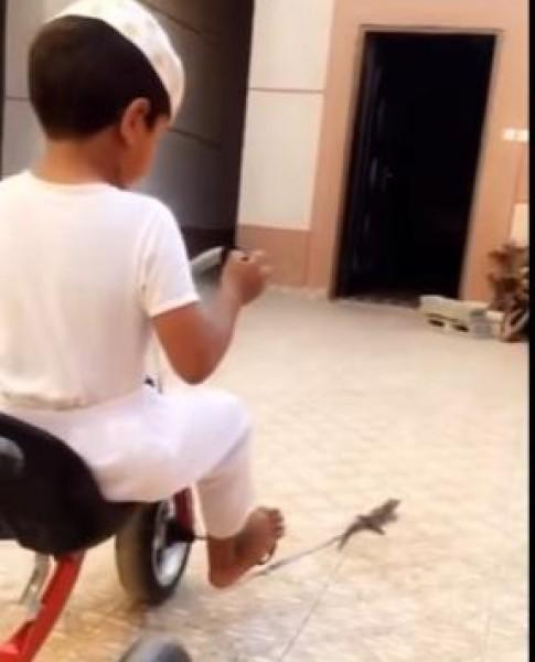 """فيديو: علاقة فريدة بين """" حردون"""" وطفل مضحك"""