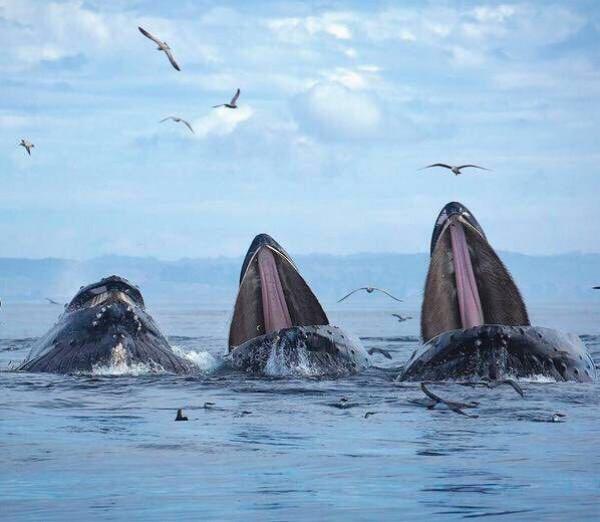 """""""الحيتان الحدباء"""""""