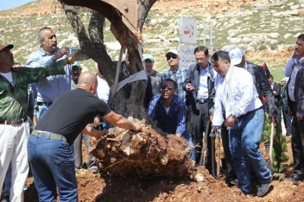 دولة يدعو لأوسع حملة لإسناد المزارعين في قطف ثمار الزيتون خلف الجـدار