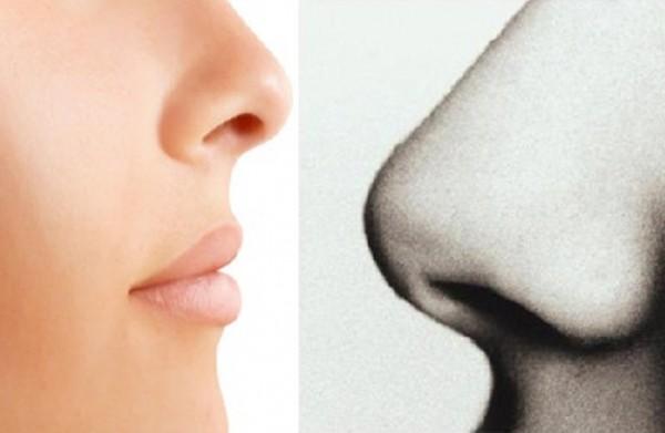 لماذا أنف الرجل أكبر من أنف المرأة