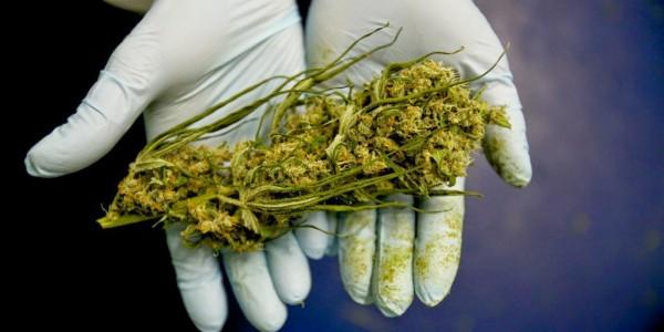 ضبط نصف طن من الحشيش المخدر قبل دخوله للسعودية