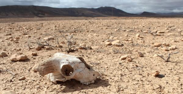 بينهما الأسد والفيل حيوانات مرشحة 9998870267.jpg