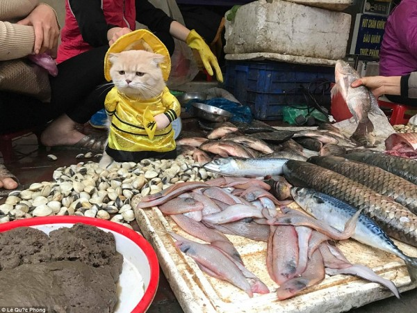 فيديو وصور: قط يبيع الاسماك في السوق ويلفت الانظار بأزيائه